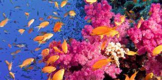 Koraller och fiskar i Hurghada
