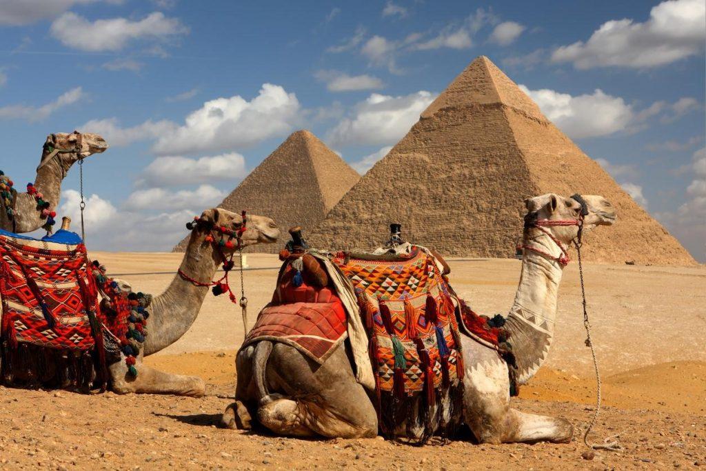 Kamele liegen vor Pyramiden