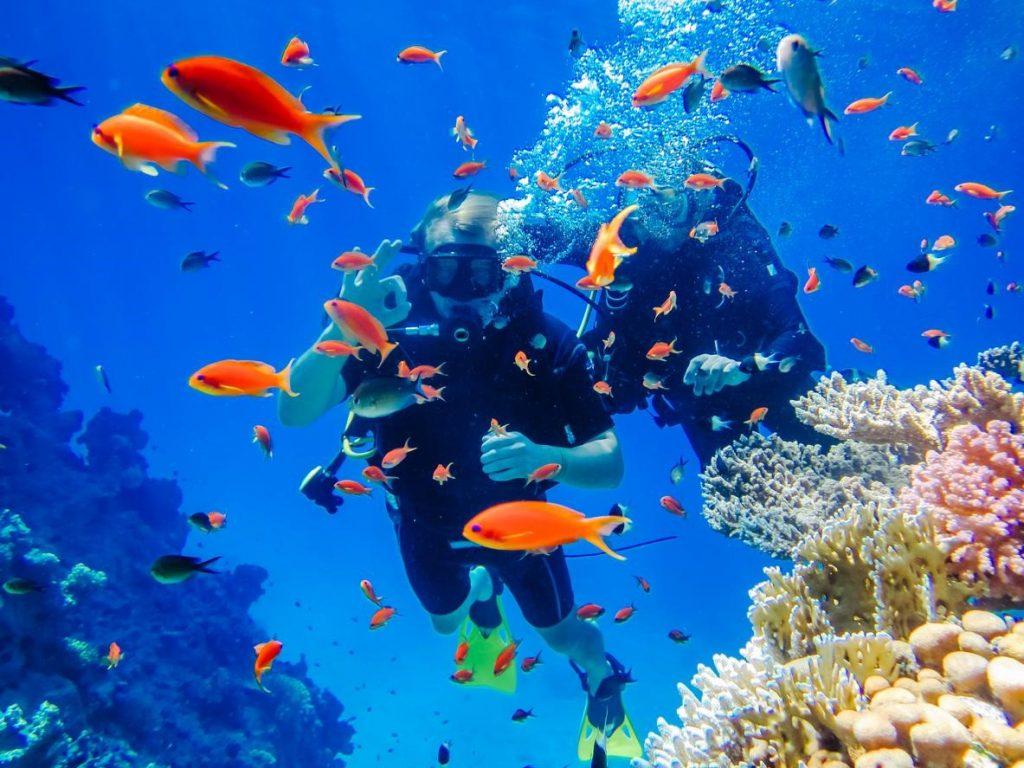 Zwei Taucher im Roten Meer umringt von bunten Fischen