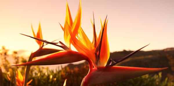 bloemen Madeira