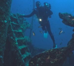 thistlegorm duiker