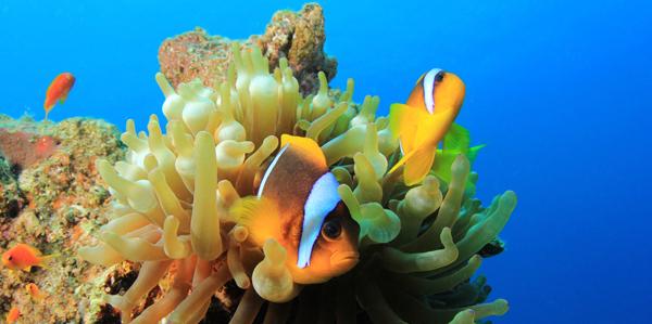 Onderwaterwereld van Egypte
