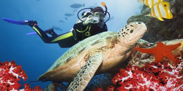 Diving Egypt Turtle Diver Mannen