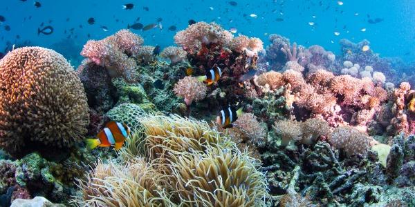 koraal - souvenirs