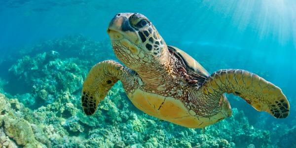 schildpad - souvenir