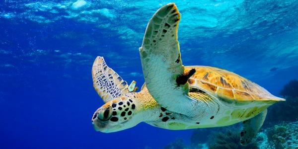 Griekenland schildpad dierendag