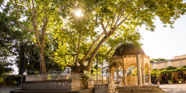 Sunweb - Kos - Hippocrates tree