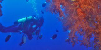 Duiken Rode Zee