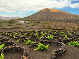 Lanzarote wijnproeven
