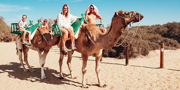 Gran Canaria kamelen