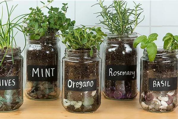 Jardin herbes aromatiques DIY