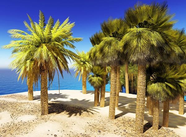 promo vacances dernière minute Tunisie